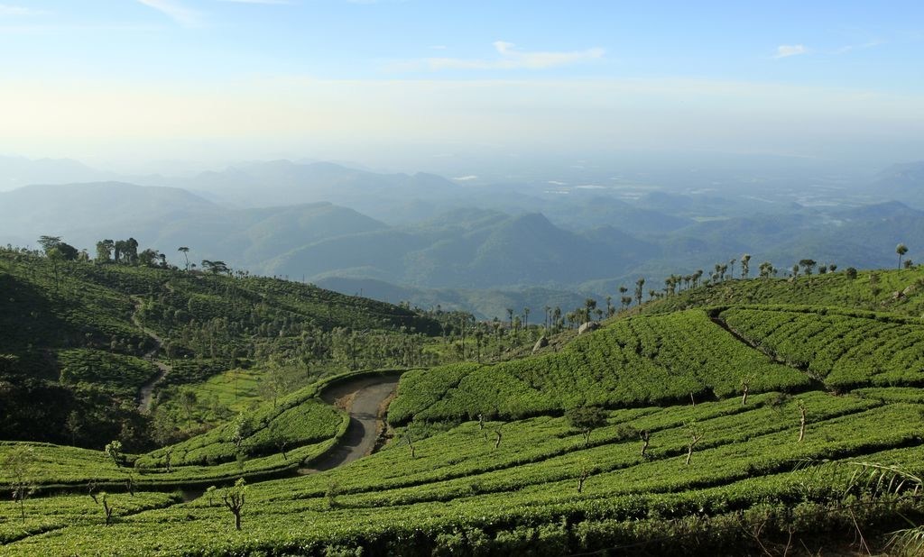 sri-lanka-haputale-tea-plantations-photo-08